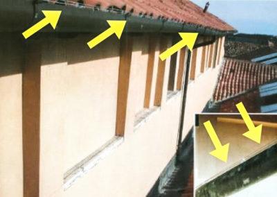 linee elettrificate anti piccioni Trieste