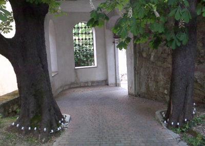 trattamento antiparassitario piante e alberi Trieste