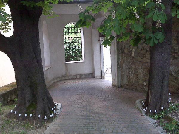 trattamenti fitoterapici alberi e piante Trieste