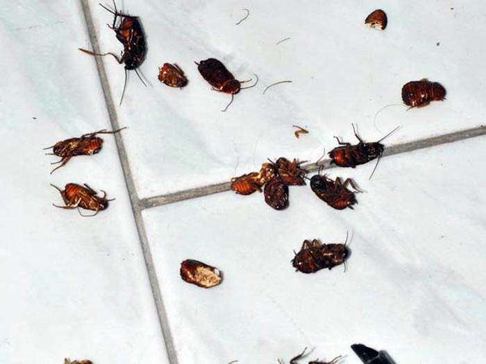 disinfestazione scarafaggi e insetti Trieste
