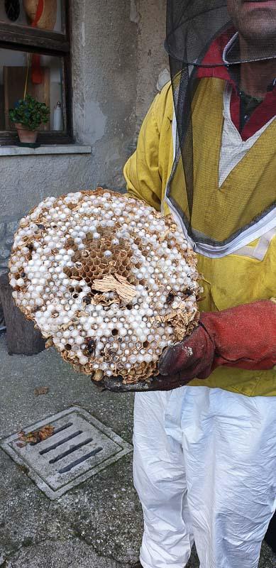 sanificazione da vespe e calabroni Geibi Trieste