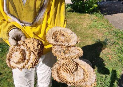 rimozione-nidi-vespe-Geibi